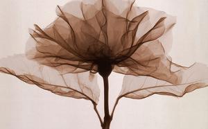 A Rose by Steven N^ Meyers