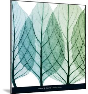 Celosia Leaves I by Steven N^ Meyers