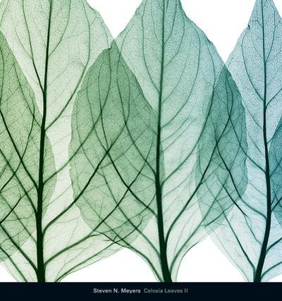 Celosia Leaves II