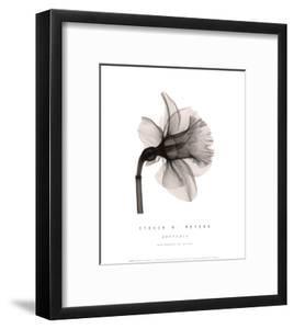 Daffodil II by Steven N^ Meyers