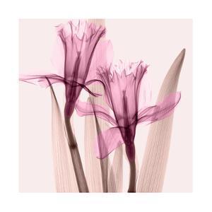 Daffodils III by Steven N^ Meyers