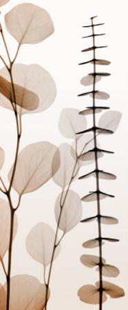 Eucalypti I by Steven N. Meyers
