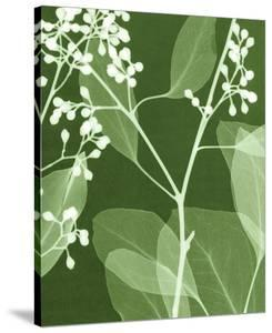 Eucalyptus Buds II by Steven N^ Meyers