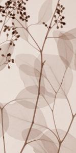Eucalyptus III by Steven N. Meyers