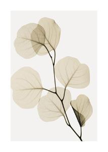 Eucalyptus Leaves by Steven N. Meyers