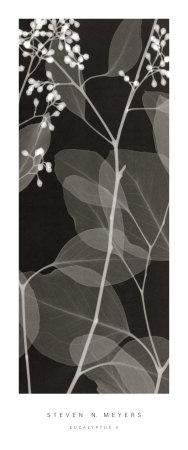 Eucalyptus V