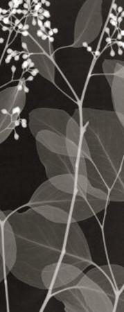 Eucalyptus V by Steven N. Meyers
