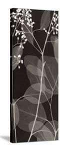 Eucalyptus V by Steven N^ Meyers