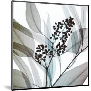 Eucalyptus by Steven N^ Meyers