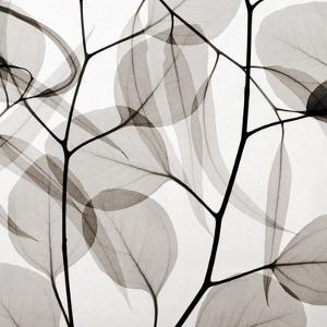 Eucalytus Leaves [Positive] by Steven N^ Meyers