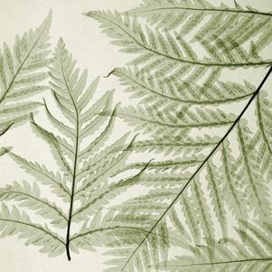 Ferns I by Steven N^ Meyers