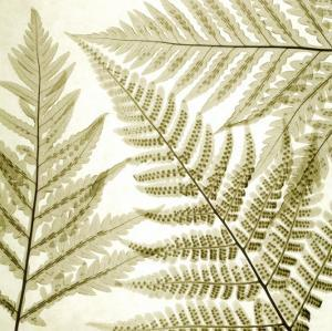 Ferns III by Steven N^ Meyers