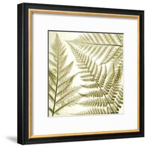 Ferns III by Steven N^ Meyers