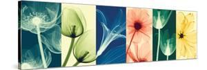 Flora by Steven N^ Meyers