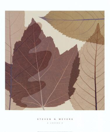 Four Leaves II by Steven N. Meyers