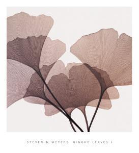 Ginkgo Leaves I by Steven N. Meyers