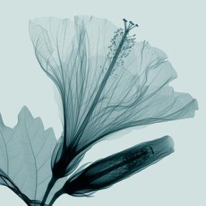 Hibiscus 2 by Steven N^ Meyers