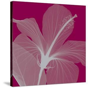 Hibiscus/Silver by Steven N^ Meyers