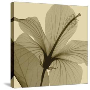 Hibiscus by Steven N^ Meyers