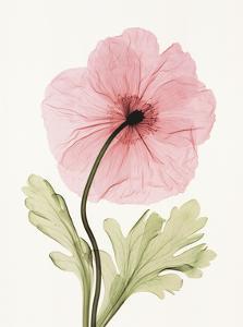 Iceland Poppy I by Steven N^ Meyers