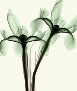 Iris I by Steven N^ Meyers