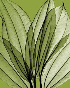 Leaf Bouquet, Green by Steven N^ Meyers