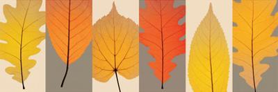 Leaves by Steven N. Meyers
