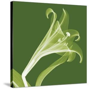 Lilies A (Negative) by Steven N^ Meyers