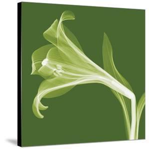 Lilies B (Negative) by Steven N^ Meyers