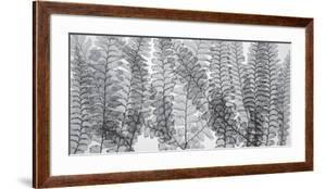 Maidenhair Ferns by Steven N^ Meyers