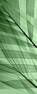 Palms A, Green Flash by Steven N^ Meyers