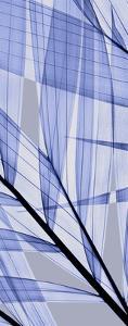Palms B, Blue by Steven N^ Meyers
