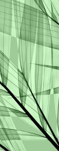 Palms B, Green Flash by Steven N^ Meyers
