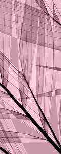 Palms B, Rose Quartz by Steven N^ Meyers