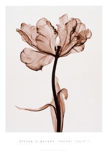 Parrot Tulip I by Steven N^ Meyers