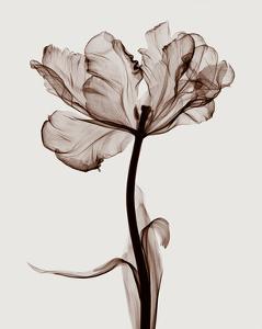 Parrot Tulips I by Steven N^ Meyers