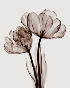 Parrot Tulips II by Steven N^ Meyers