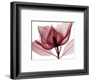 Red Magnolia I by Steven N^ Meyers