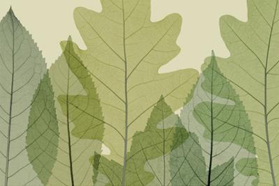 Six Leaves by Steven N. Meyers