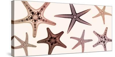 Starfish Collection (sepia)