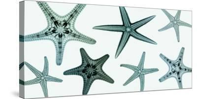 Starfish Collection (teal)