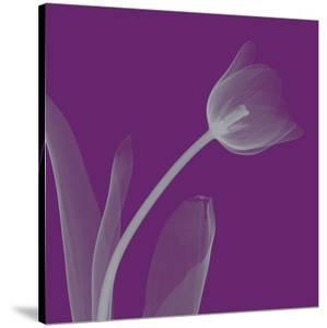 Tulip/Silver (small) by Steven N^ Meyers