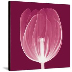 Tulips A (Negative) by Steven N^ Meyers