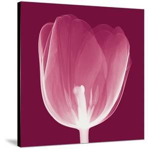 Tulips B (Negative) by Steven N^ Meyers