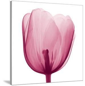 Tulips B (Positive) by Steven N^ Meyers