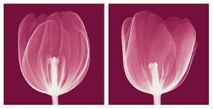 Tulips [Negative] by Steven N^ Meyers