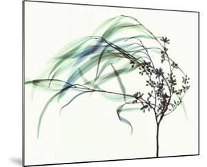 Wind by Steven N^ Meyers