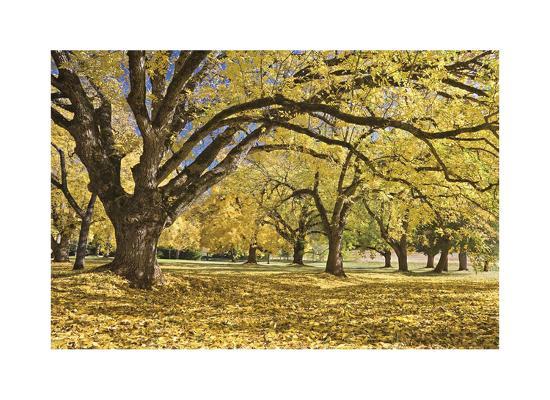 Stewart Park Walnut Trees I-Donald Paulson-Giclee Print