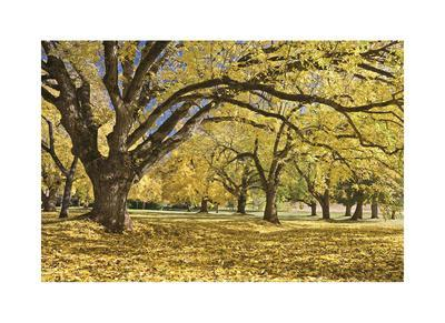 https://imgc.artprintimages.com/img/print/stewart-park-walnut-trees-i_u-l-f5837g0.jpg?p=0