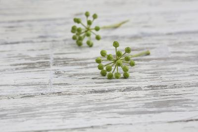 Still Life, EfeublŸten, Green, Wood, White-Andrea Haase-Photographic Print
